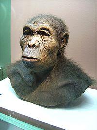 Ricostruzione delle sembianze di Homo habilis (foto di Lillyundfreya, Westfälisches Museum für Archäologie, Herne, Germania)