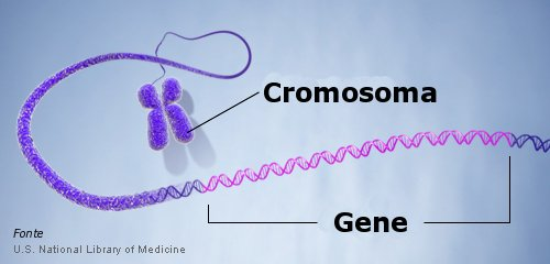 I geni appartengono ai cromosomi i quali, a loro volta, costituiscono il DNA (sono 46 in tutto, organizzati in 23 coppie)