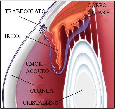 Vie di deflusso umor acqueo. Se la pressione intraoculare è troppo elevata si rischiano danni irreversibili al nervo ottico