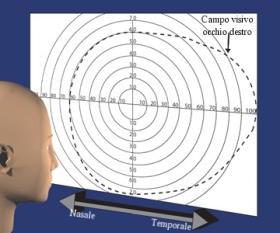 Campo visivo (occhio destro)