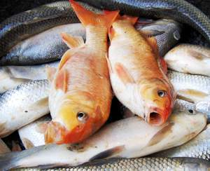 Una dieta a base di pesce può aiutare a prevenire la degenerazione maculare senile. Foto: photofreebank