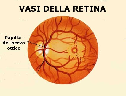 Vasi sanguigni della retina