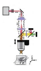 Micrscopio 3D (schema)