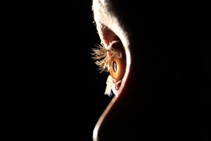 Foto di Gary Brinkman, Broadbeach Waters, QLD (Premio MDFA 2012)