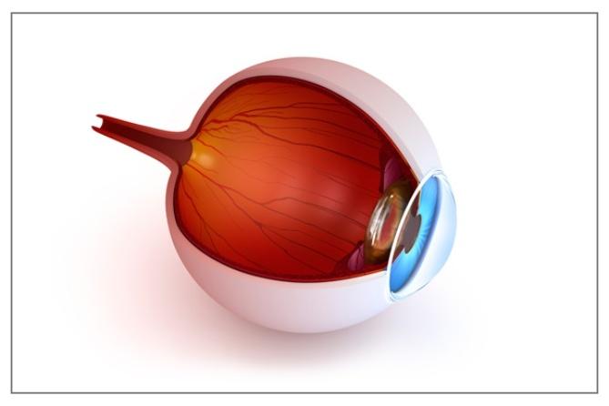 bulbo_oculare-ricostruzione_virtuale.jpg